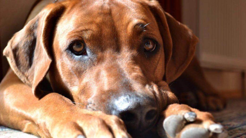 Der Hundezwinger für Zuhause