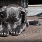 Hundezwinger Metall
