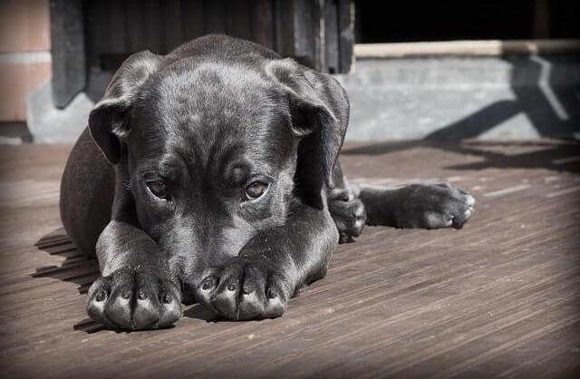 Hundezwinger Stahl