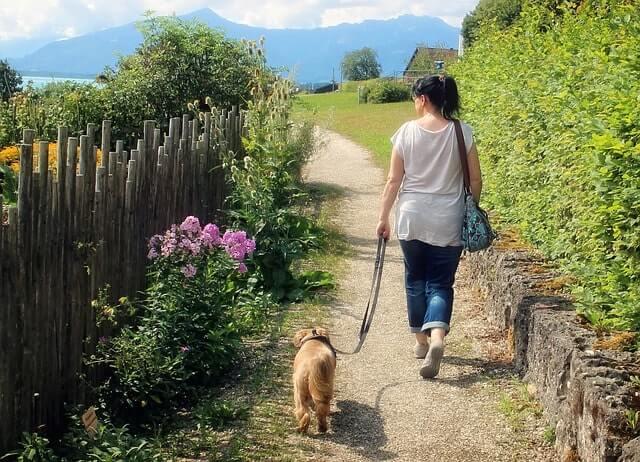 Gassi gehen mit Hunde