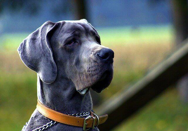 Hundezwinger Größe