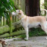 Hundezwinger mit Auslauf