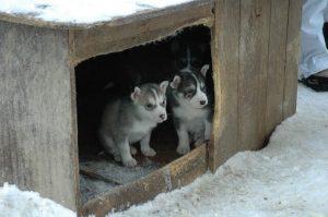 Hundehütte für draußen