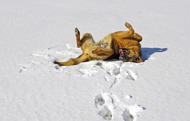 Hundehütte winterfest machen