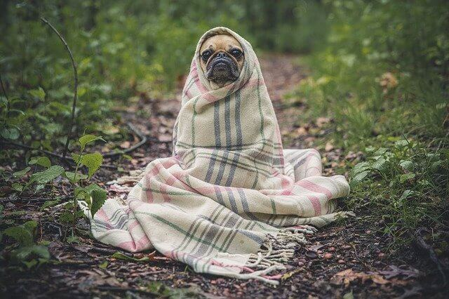 Heizung für Hundehütte