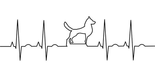 Herzschlag Hund