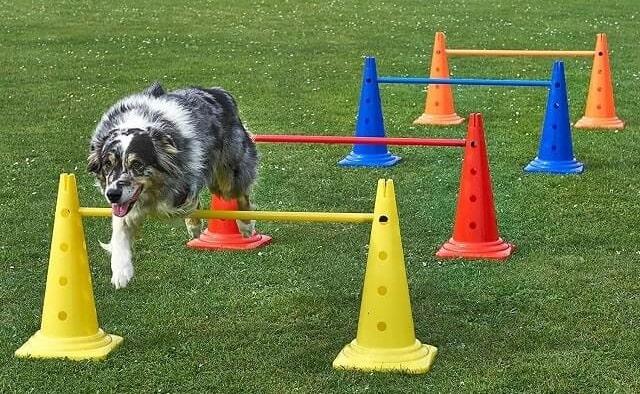 Hund über Hindernis