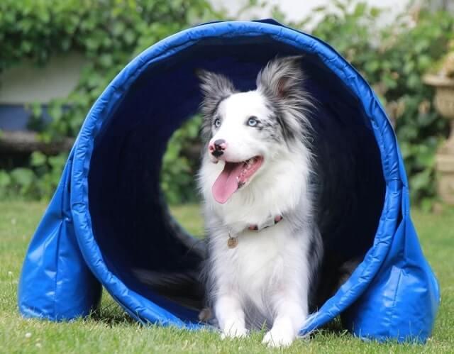 Tunnel für Hund