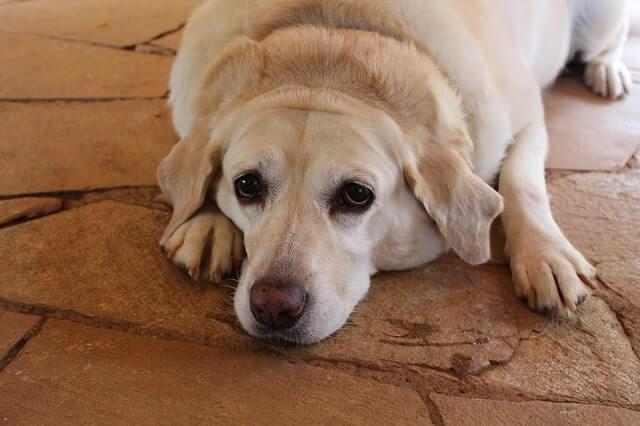 Futter für kastrierte Hunde