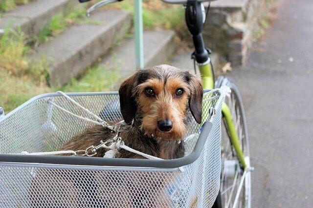 Hund auf Fahrrad transportieren