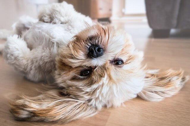 Hochverdauliches Hundefutter